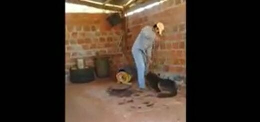 Iniciaron una causa por Maltrato Animal al hombre que fue filmado mientras agredía a dos perros en Santo Pipó