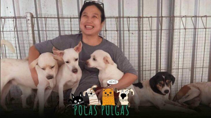 Indonesia: una mujer se convirtió en heroína al rescatar a más de 1400 perros