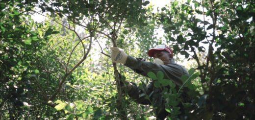 Kits sanitarios: el INYM extiende el beneficio a mayor cantidad de tareferos