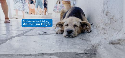 animal sin hogar