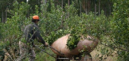 Programas del INYM generan mejores condiciones de trabajo y yerbales más eficientes
