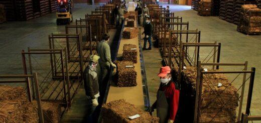 Misiones finalizó el acopio de tabaco con más de 30 millones de kilos