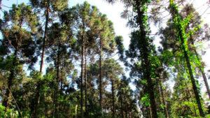 Ciencias Forestales en la REDFOR.ar: el valor de los bosques en términos ambientales, sociales y económicos