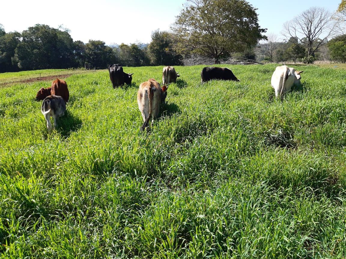 Agricultura Familiar refuerza acompañamiento técnico a productores