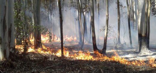 Corrientes se mantiene en alerta crítico por riesgos de incendios forestales