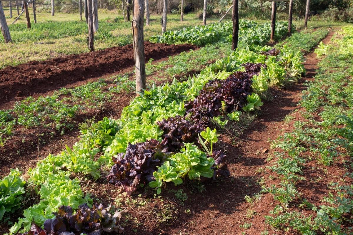 El gobierno de Misiones entregó préstamos delPrograma de Fomento y Crédito a la Producción Primaria