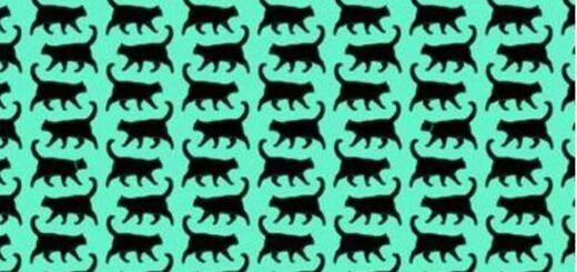 Nuevo reto viral: ¿podés encontrar a los tres gatitos con collar?