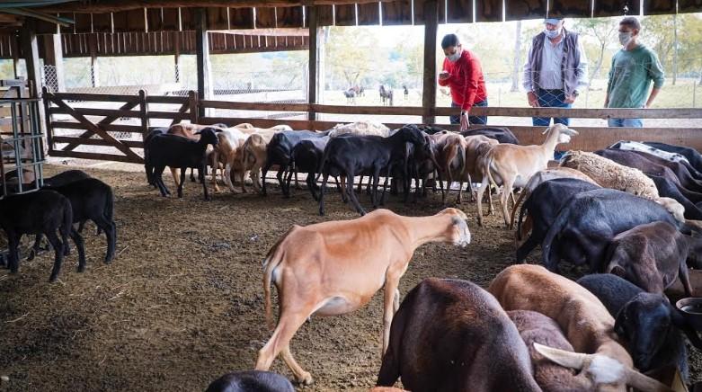 El IFAI entregó alimentos balanceados a productores ovinos y caprinos de Fachinal