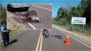 """Nicolás Loreiro Ocampo, de Red Yaguareté: """"Se puede evitar la muerte de un tapir o un yaguareté en un atropellamiento vial si se respetan las velocidades máximas en rutas que cruzan áreas naturales"""""""