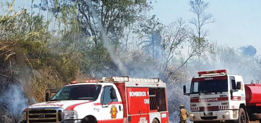 Incendios forestales: se quema un tramo al costado de la ruta 14 que va de Oberá a Leandro N Alem