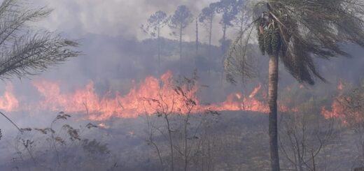Se quemaron 50 hectáreas de maleza en Loreto