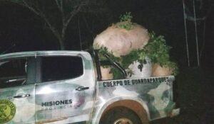 Recuperaron 700 kilos de yerba mate en un operativo conjunto entre guardaparques de Ecología y Policías en San Pedro