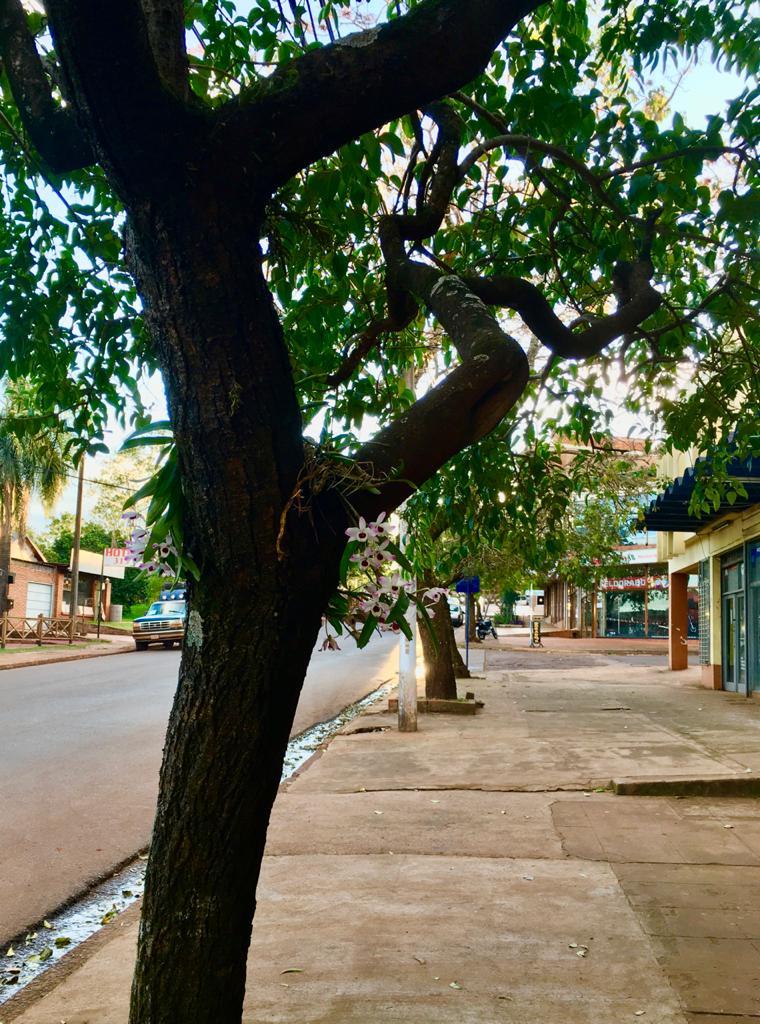 Eldorado: el Municipio plantó especies nativas en el marco del Día del Árbol