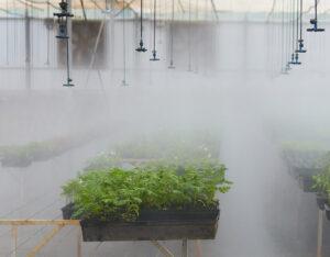 Pruebas de variedades, próximo paso para producir cannabis medicinal en Biofábrica Misiones