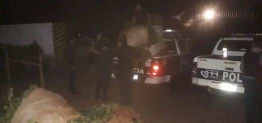 Secuestraron casi una tonelada de yerba mate robada en Guaraní