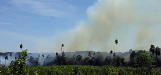 Alerta crítico: en Misiones rige la prohibición del uso de fuego para quemas en zonas rurales y urbanas
