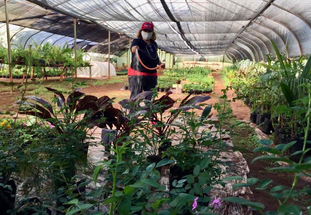 Eldorado: en el Vivero Municipal las plantas reciben atención de lunes a lunes
