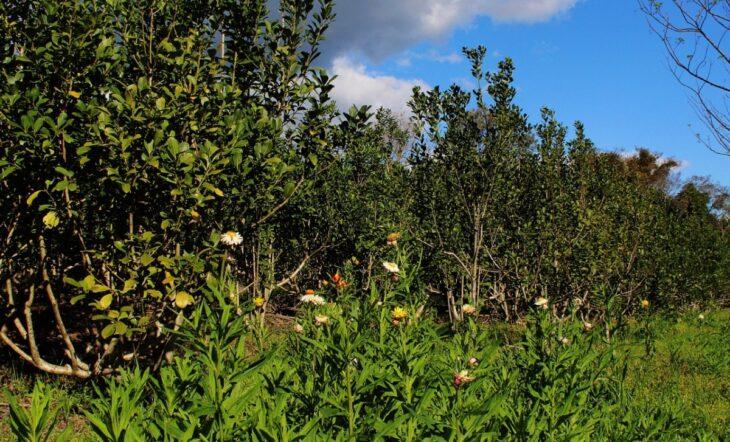 Productores proyectan producir abono orgánico a gran escala