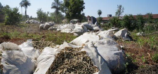 El INYM inutilizó carga de palitos de yerba mate que había intervenido en General Urquiza