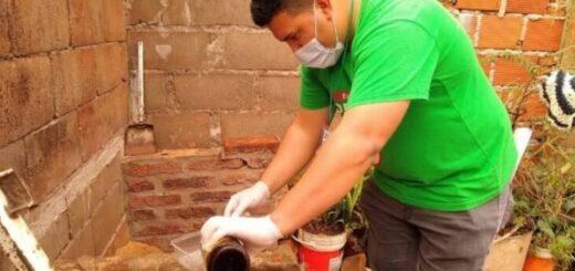 Operativo LIRAa: las macetas, floreros y los bebederos de animales son los potenciales criaderos más frecuentes del mosquito transmisor del dengue