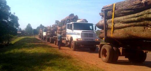 Bosques Nativos: en operativos de Control Forestal detectaron irregularidades en lotes de aprovechamiento en Yabotí, transporte de rollos sin guías y aserraderos sin habilitación