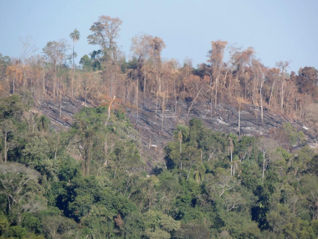 Informe Especial: En Misiones hay un negocio inmobiliario detrás del delito de la usurpación de tierras