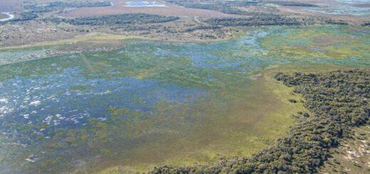 """INTA: """"Hay que contribuir a la sostenibilidad de los humedales de la Argentina vinculados a la producción agropecuaria y forestal"""""""