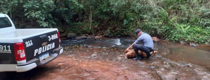 Resguardaron a un venado y lo devolvieron a su hábitat natural