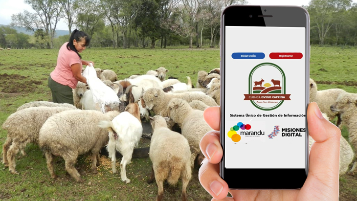 Desarrollaron una aplicación con múltiples beneficios para los productores ovinos y caprinos de la zona Sur de Misiones
