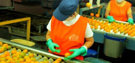 A través de una resolución, fortalecen la competitividad de productores citrícolas