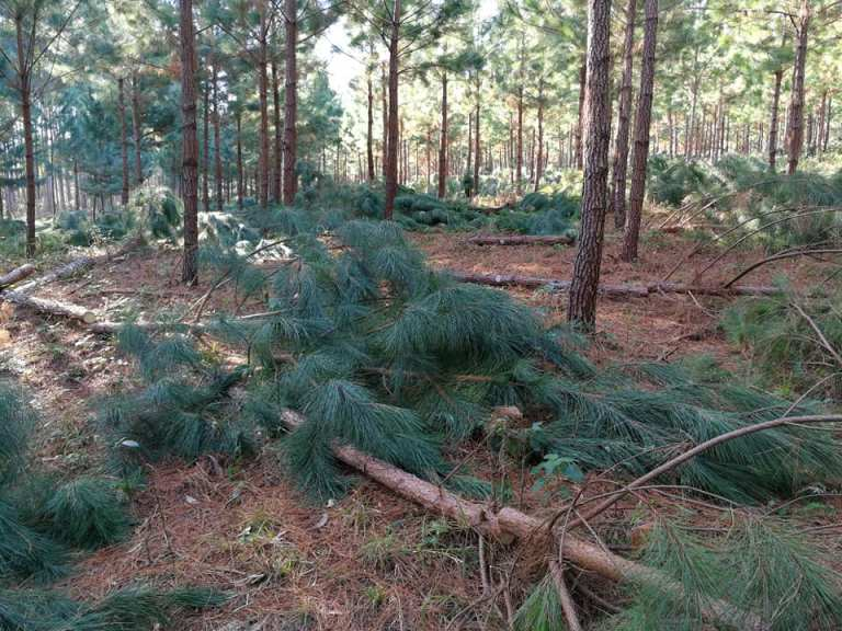 """Hugo Escalada, del InFoPro: """"La tasa forestal y la fijación de precios mínimos por la materia prima rige por ley, su aplicación debe cumplirse"""""""