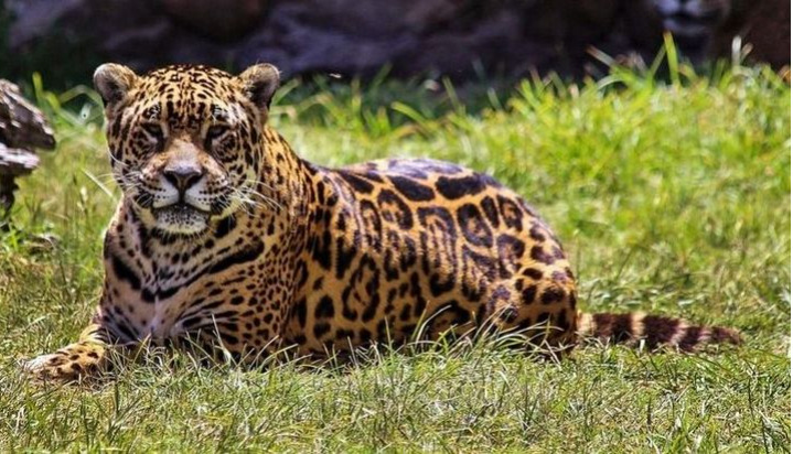 Especies en peligro: el planeta perdió el 70% de la fauna silvestre en los últimos 50 años