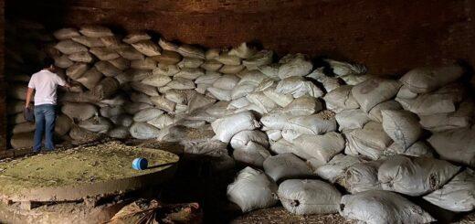 El INYM intervino alrededor de 90 mil kilos de palo de yerba en dos procedimientos