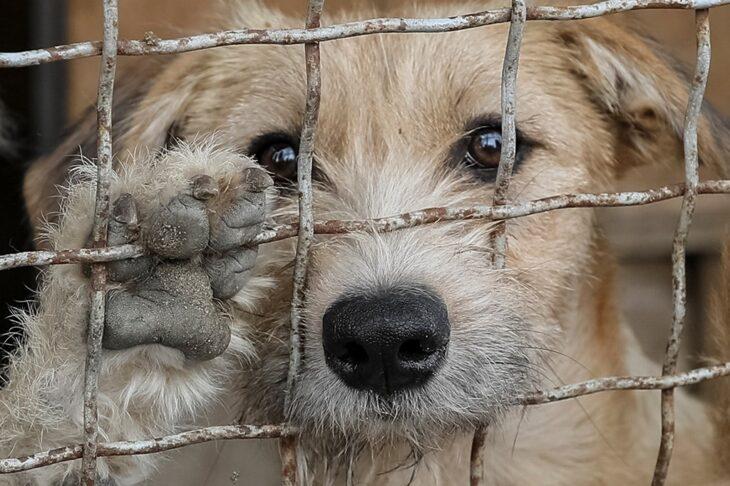 Presentaron un proyecto de ley que pide que se enseñe derechos animales en las escuelas