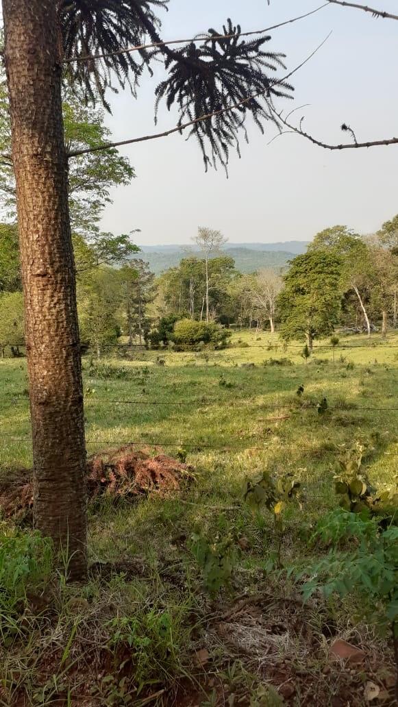 Campo Viera