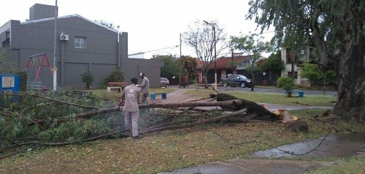 Voladuras de techos y caídas de árboles y postes: lo que dejó el paso de la tormenta durante la madrugada de Posadas