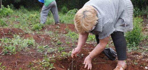 Yacyretá continúa con la arborización en Misiones