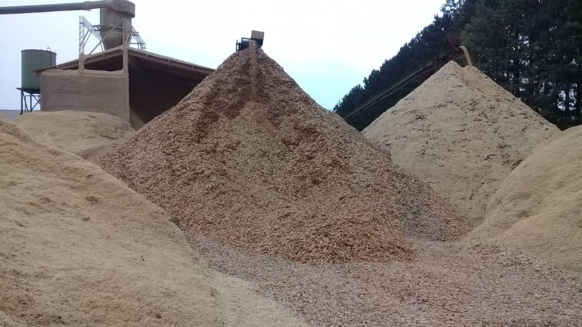 APICOFOM llamó a dialogar entre todos los actores del sector forestal de Misiones para resolver el precio de chips y raleo