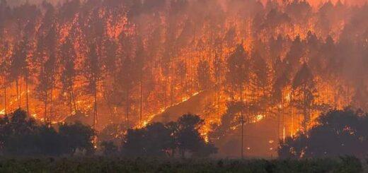California: en lo que va de 2020, se quemaron más de un millón y medio de hectáreas y hay 31 muertos por los incendios forestales