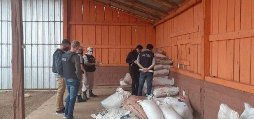 Prefectura incautó más de 6.000 kilos de semillas de soja en Misiones