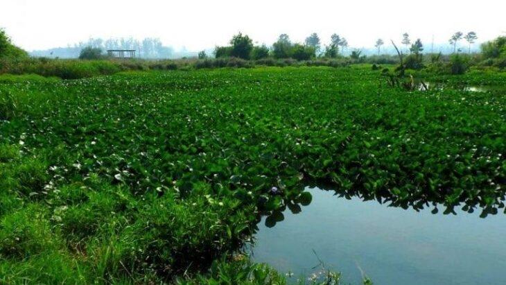 La Cámara de Diputados de Misiones aprobó la ley que reconoce como Reserva Natural Protegida a El Zaimán