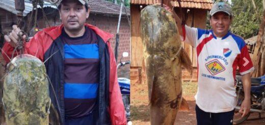 manguruyú de 44 kilos