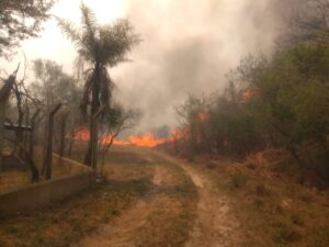 Corrientes: en Santa Rosa combatieron un incendio forestal de grandes dimensiones y nuevos focos se registran en otras tres localidades
