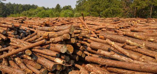 Foresto-industria: en Misiones intervendrán en la regulación de precio fijo de Chip y Raleo y la medida dividió las posiciones entre productores e industriales