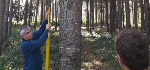 """Rubén Costas, productor y director del InFoPro Misiones: """"Se requiere concertar en el sector forestal, no confrontar"""""""