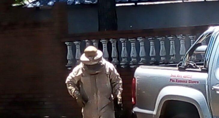 Abejas asesinas: hallaron cinco perros muertos en Candelaria