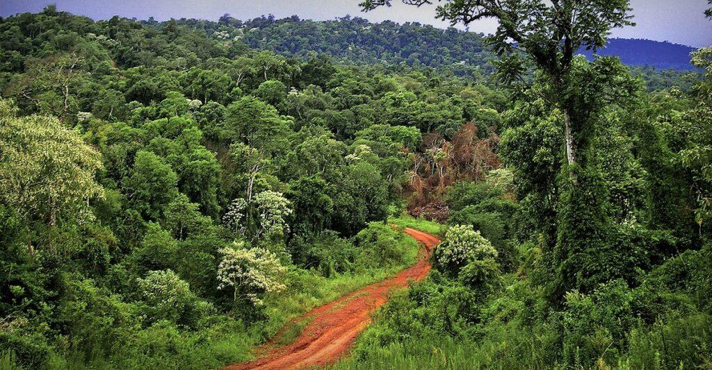 Coronavirus: Misiones comenzará a recibir viajeros interprovinciales y hará una prueba piloto con turistas en Puerto Iguazú