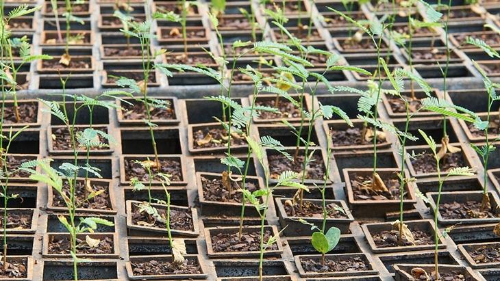 Biofábrica proveerá plantas de Algarrobo a Villa Guillermina Santa Fe para restauración ambiental