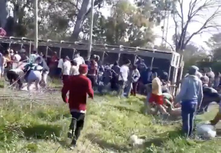 Volcó un camión con cerdos: los vecinos los carnearon en la calle