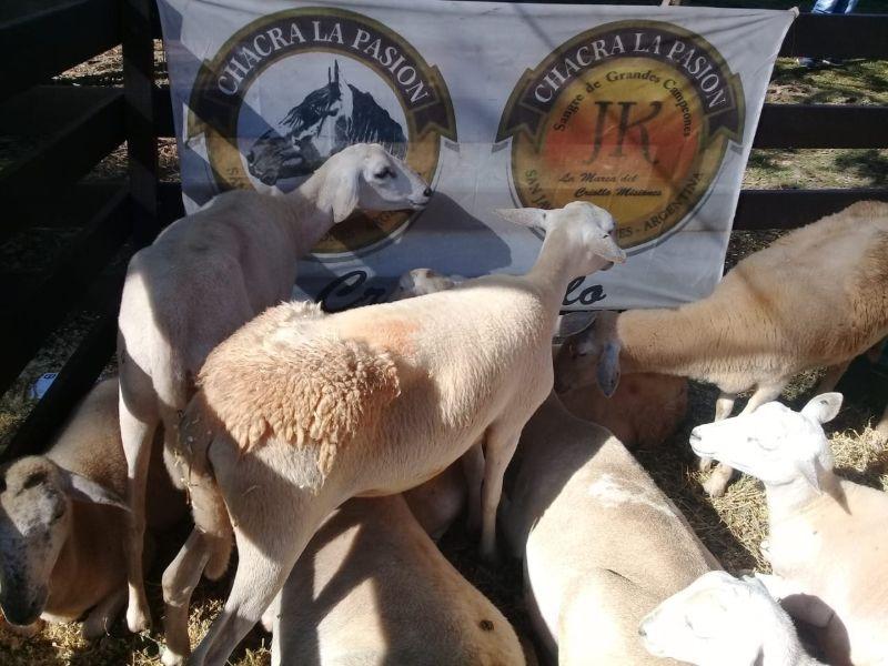 Jóvenes egresados de la EFA de Fachinal conformaron el primer grupo de misioneros esquiladores de ovinos
